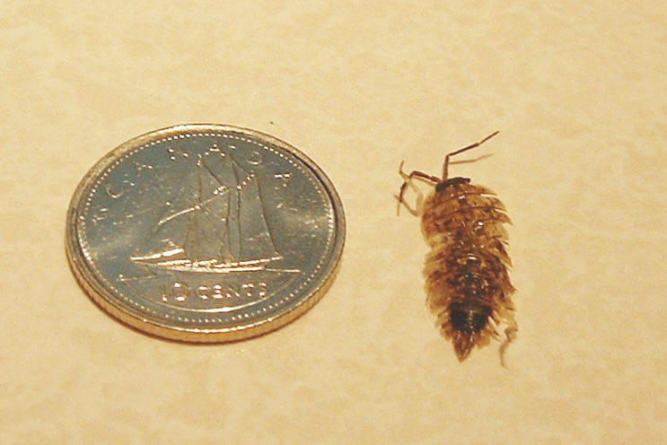 cellar bug for pinterest