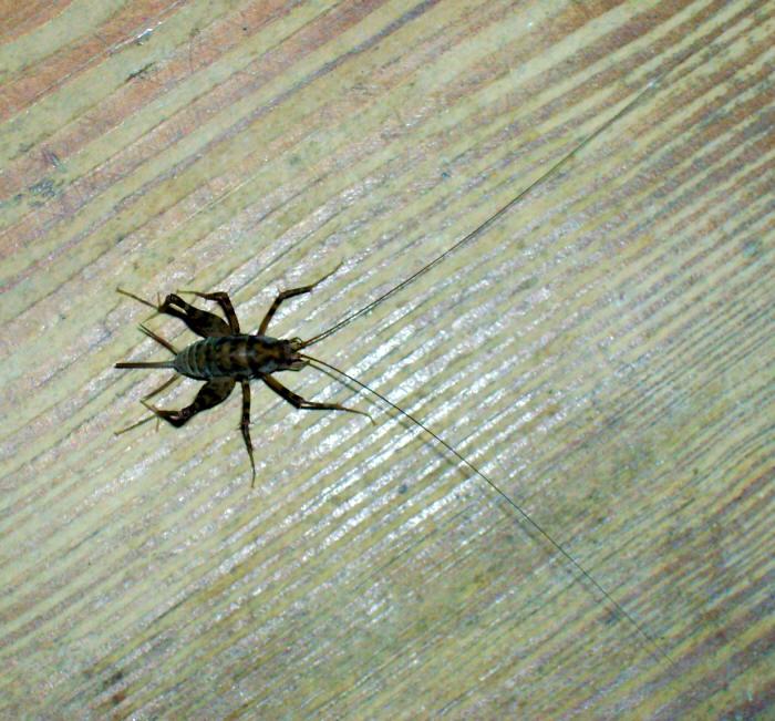 Pest Photos 2101 To 2200