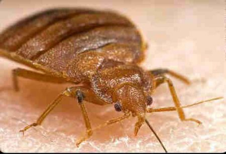 how to get rid of flour beetle infestation