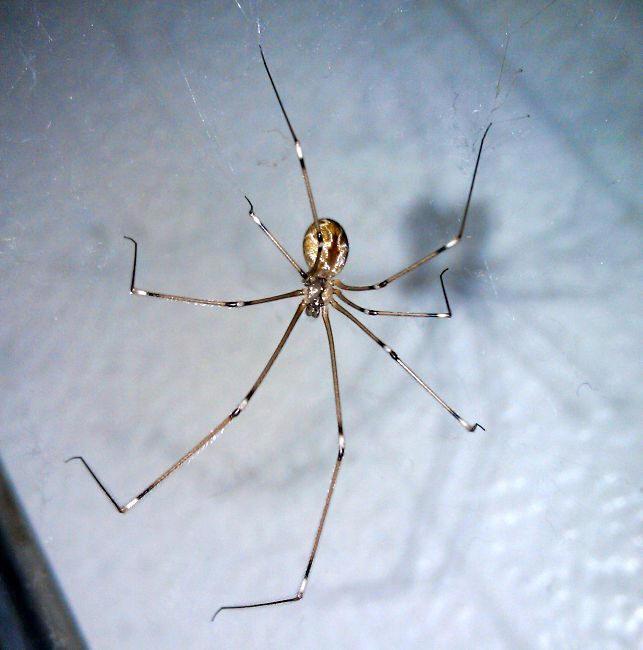 Spider Categorized Species Photos Pest Control Canada