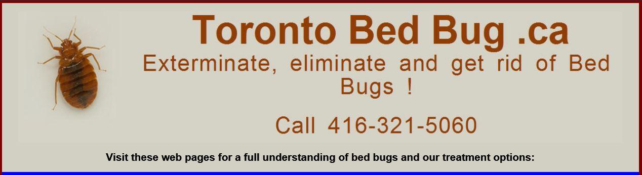 Toronto Bed Bug