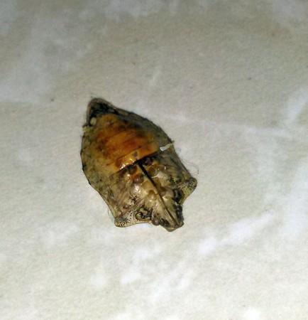 Pest Control Canada Stink Bug Carcass