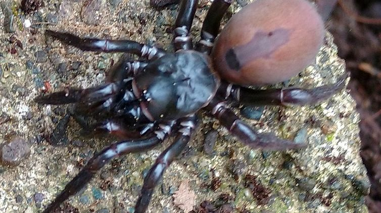 More spider identification photos Archives - PEST CONTROL CANADA