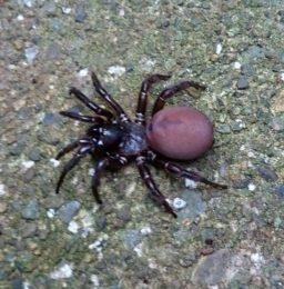 5656 spider