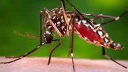med-zika-mosquito-5-things