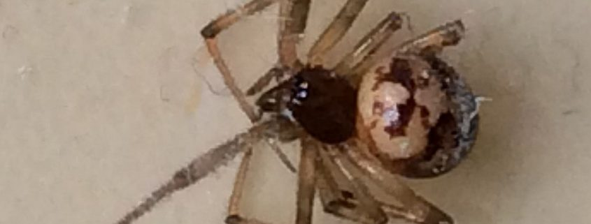 Unlikely biting spider