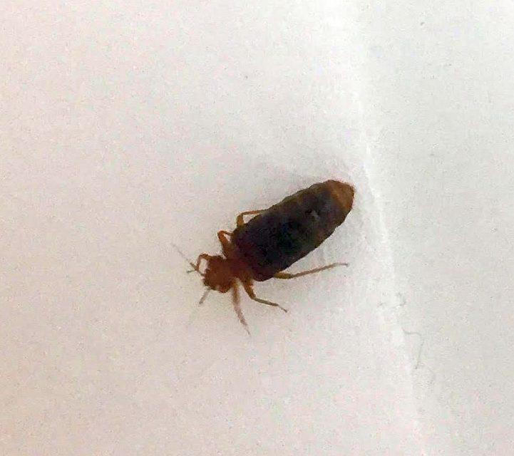 Tiny House Bug Identification – Jerusalem House