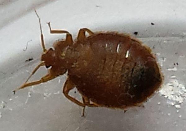 Bed bugs in bathroom - PEST CONTROL CANADA