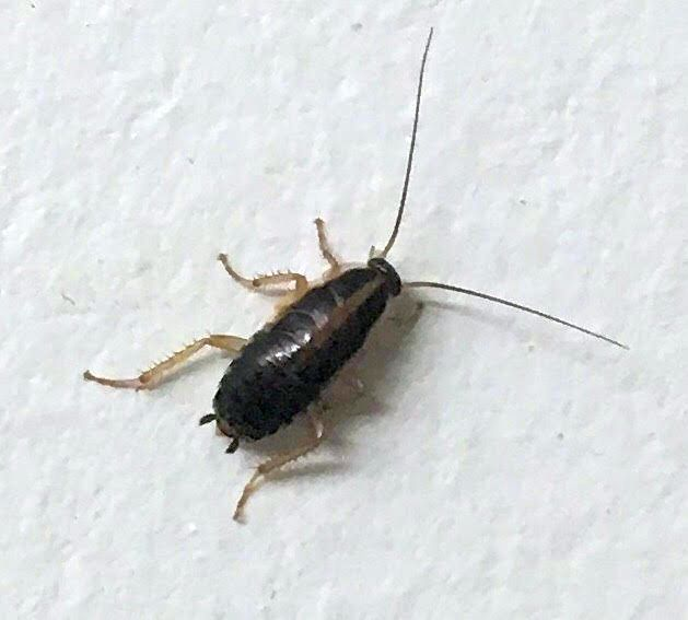 . Pest Identification Photos   PEST CONTROL CANADA