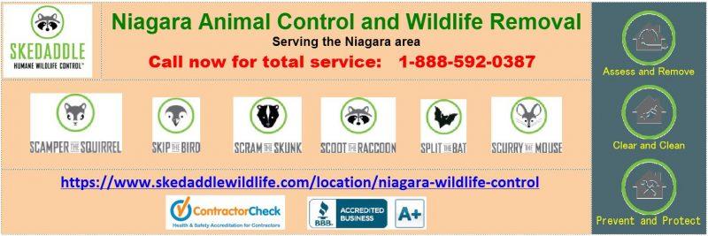 Niagara Wildlife Control