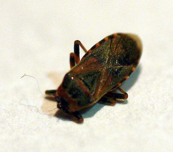 . Pest Identification Photos   PEST CONTROL CANADA