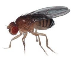 Fruit Fly control - PEST CONTROL CANADA