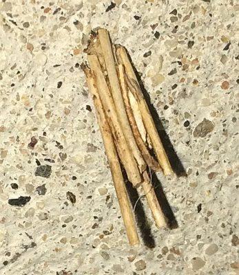 Grass bagworm case