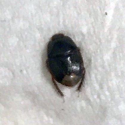 Burrowing Bug Pest Control Canada