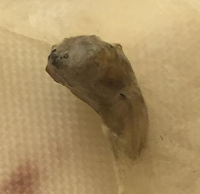 Fly Larva ?????