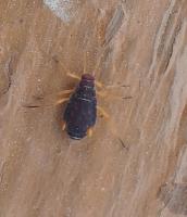 Carpenter Ant Identification and Control - PEST CONTROL CANADA