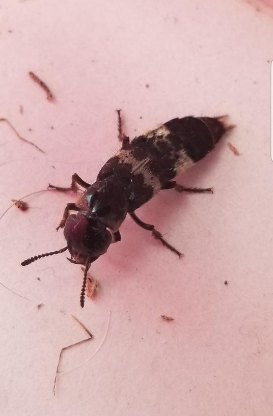 Pest Identification Photos - PEST CONTROL CANADA